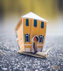 snails house